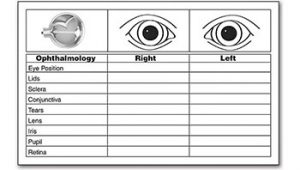 Eye Assessment Documentation