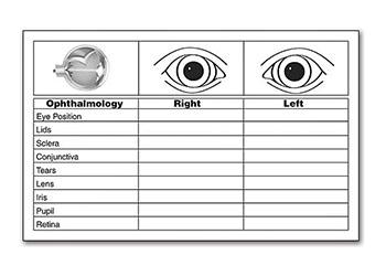 Eye Assessment Documentation For Perrla