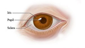 The Process of Perrla Accommodation Eye Test