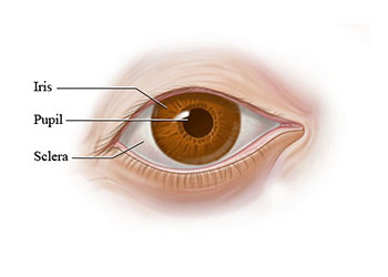 The Process of Perrla Accommodation Eye Test