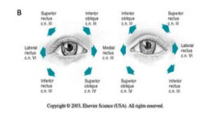 What is Perrla for Eyes?