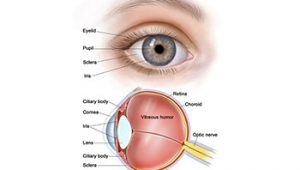 Pupil Eye Assessment Chart