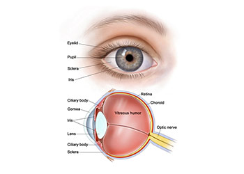 Pupil Eye Assessment Chart