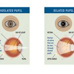 The Importance of Pupil You Should Know