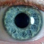 The Pupillary: Pupil Size Normal and Assessment