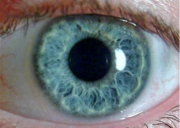 The Pupillary Pupil Size Normal and Assessment