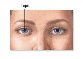 The Health of an Eye: Normal Pupil Diameter