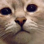 Symptoms, Causes, and Treatment for Watery Eye Cat